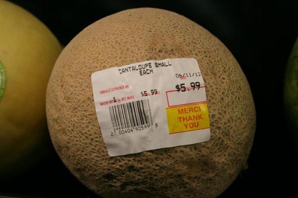 Canada Cantaloupe Price