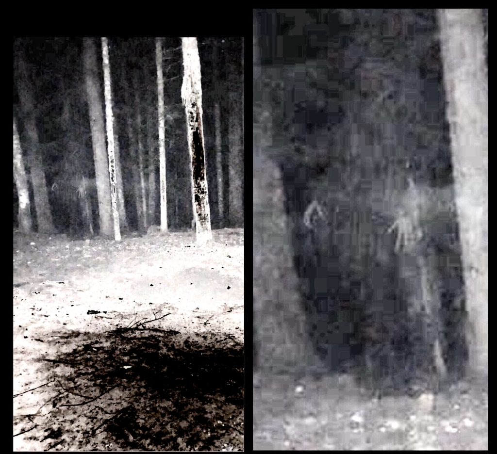 Ghost Witch Skinwalker Mt Hood Woods Oregon 2